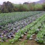 Πληρωμές δικαιούχων βιολογικής γεωργίας