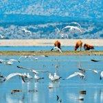 Δωρεάν εκπαίδευση νέων επιστημόνων στην προστασία βιοποικιλότητας της Κάρλας