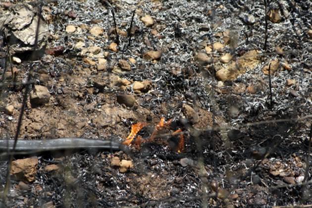 Απανθρακώθηκαν 100 αμνοερίφια στο Αργυροπούλι