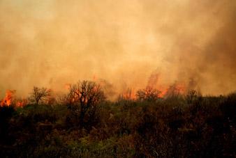 Πυρκαγιά στοv Σχοινιά