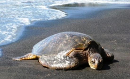 Εντοπίστηκε νεκρή χελώνα