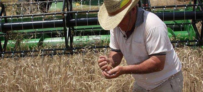 Έλεγχοι σε καλλιέργειες σιτηρών