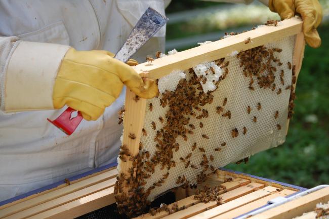 Ενημερωτική ημερίδα για μελισσοκόμους στα Φάρσαλα