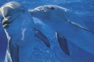Φάλαινες και δελφίνια έχουν «ανθρώπινες» κοινωνίες και πολιτισμούς