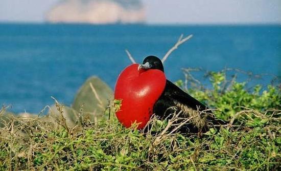 Όλο και λιγότερα πουλιά στην Ευρώπη