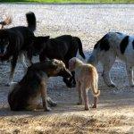600.000 ευρώ σε φορείς της Αυτοδιοίκησης για καταφύγια αδέσποτων ζώων