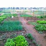Αστική γεωργία