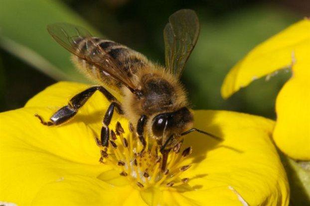 Προστασία μελισσών κατά τη διάρκεια ψεκασμών με γεωργικά φάρμακα