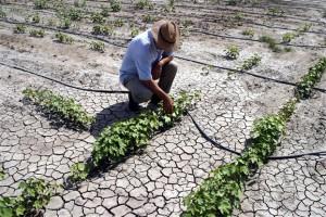 Συμπόσιο στη Λάρισα με θέμα «Ευάλωτη Γεωργία της Θεσσαλίας: Παρόν – Προοπτικές»