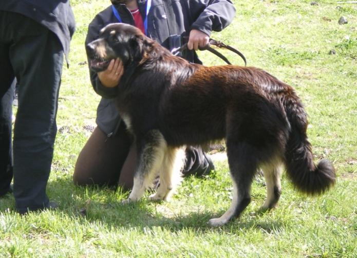 Μητρώο δεσποζόμενων ζώων στο Δήμο Λαρισαίων
