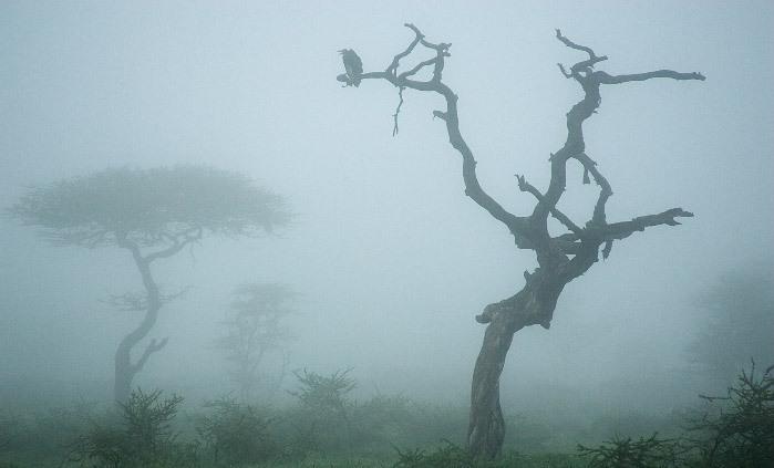 Πρωινές ομίχλες στη Θεσσαλία