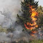 Πυρκαγιά κοντά στα Φάρσαλα