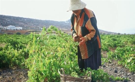 Επιπλέον ενίσχυση 125 εκατ. ευρώ σε αγρότες