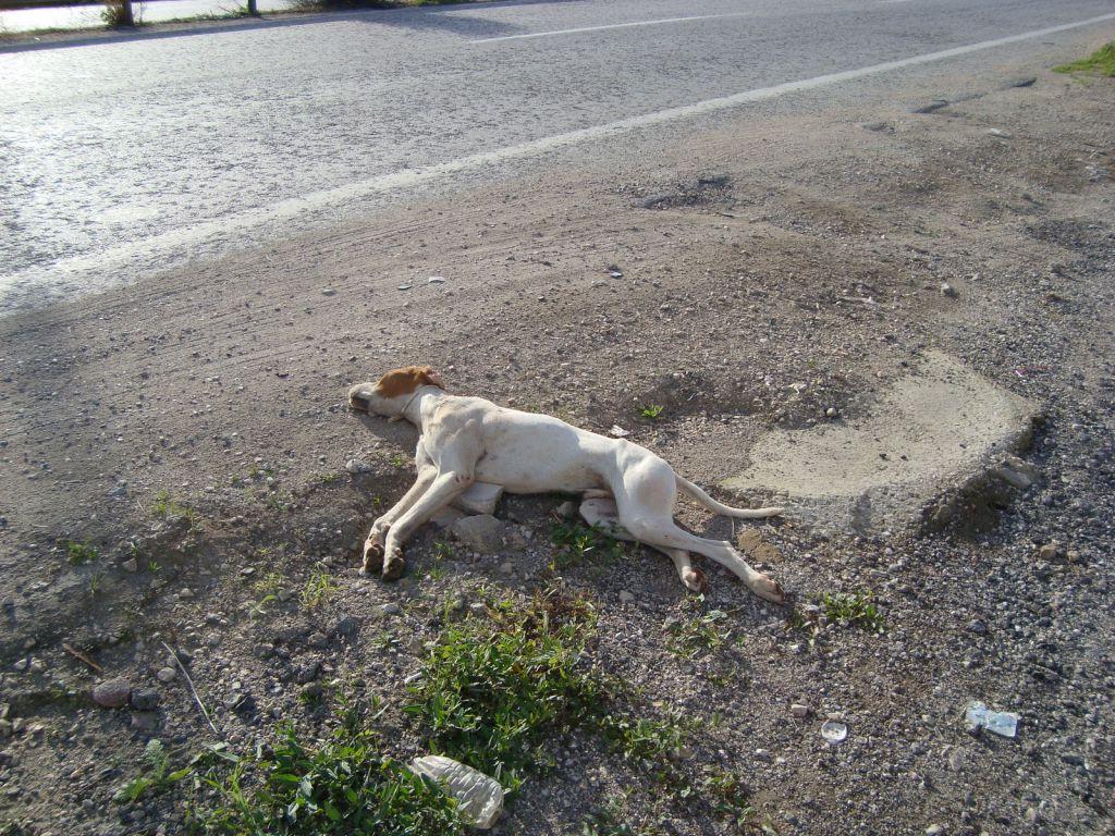Έκλεψαν και θανάτωσαν σκύλο!