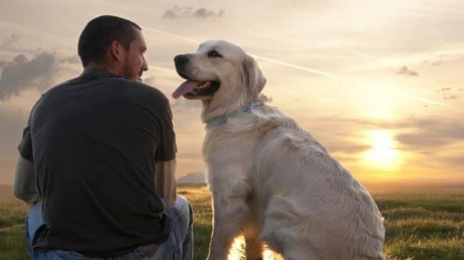 Οι σκύλοι πράγματι αναγνωρίζουν τη φωνή του αφεντικού τους