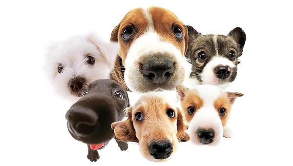 Οι σκύλοι ζηλεύουν όπως οι άνθρωποι