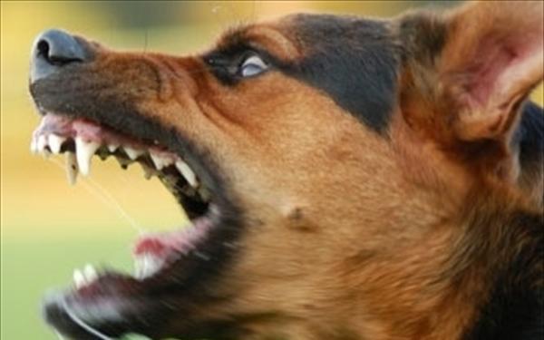 Αδέσποτοι σκύλοι επιτέθηκαν σε 7χρονη μαθήτρια