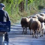 Μετάθεση στην ημερομηνία υποβολής αιτήσεων για τη βιολογική κτηνοτροφία