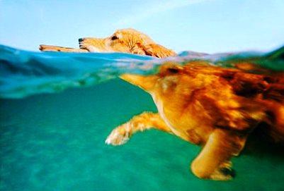 Μπάνιο στη θάλασσα με το σκύλο και το νόμο;