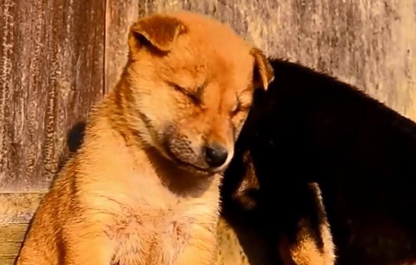 Νυσταγμένα ζώα προσπαθούν να μείνουν ξύπνια (video)