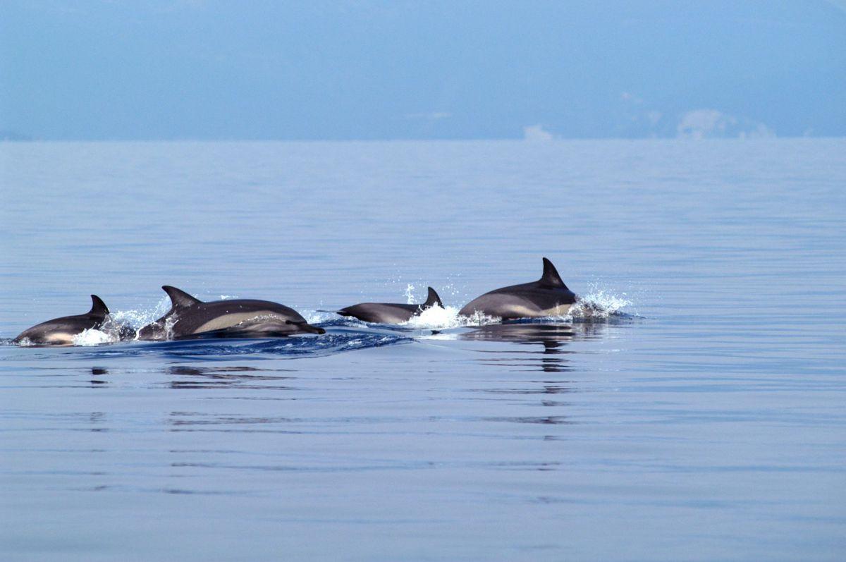 Δελφίνια στα παράλια της Λάρισας…