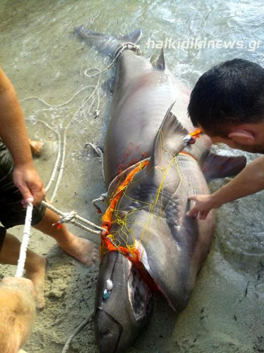 Ψαράς έπιασε σκυλόψαρο 3 μέτρα