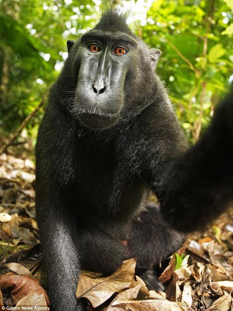 monkey-470-2