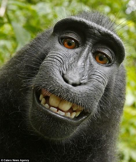 monkey-470