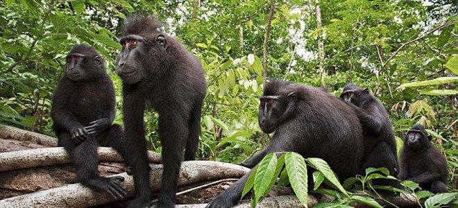 «Μάχη» για τη selfie μιας… μαϊμούς!