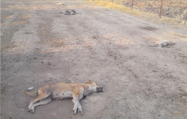 Παρέμβαση Εισαγγελέα για τη μαζική δηλητηρίαση τουλάχιστον 20 σκύλων