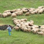 Ημερίδα για την κτηνοτροφία στον Παλαμά