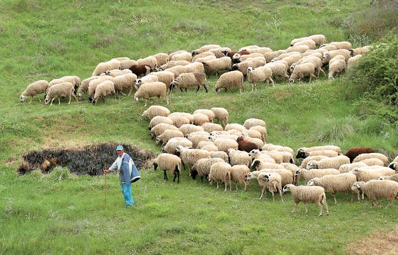 Πληρωμές σε δικαιούχους της «Βιολογικής Κτηνοτροφίας»