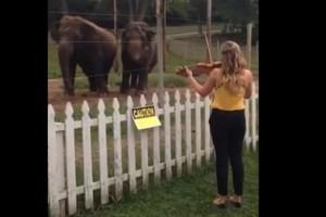 Κονσέρτο για ελέφαντες (video)