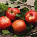 Εκδηλώσεις για Αγιώτικο Πανηγύρι και 19η Γιορτή Μήλου