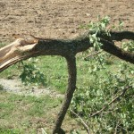 Λαμία: Παραλίγο νέα τραγωδία – Τον τραυμάτισε το δέντρο που έκοβε