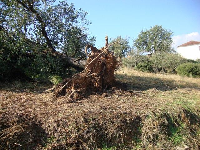 Εικόνες βιβλικής καταστροφής στα Αμπέλια Βερδικούσιας
