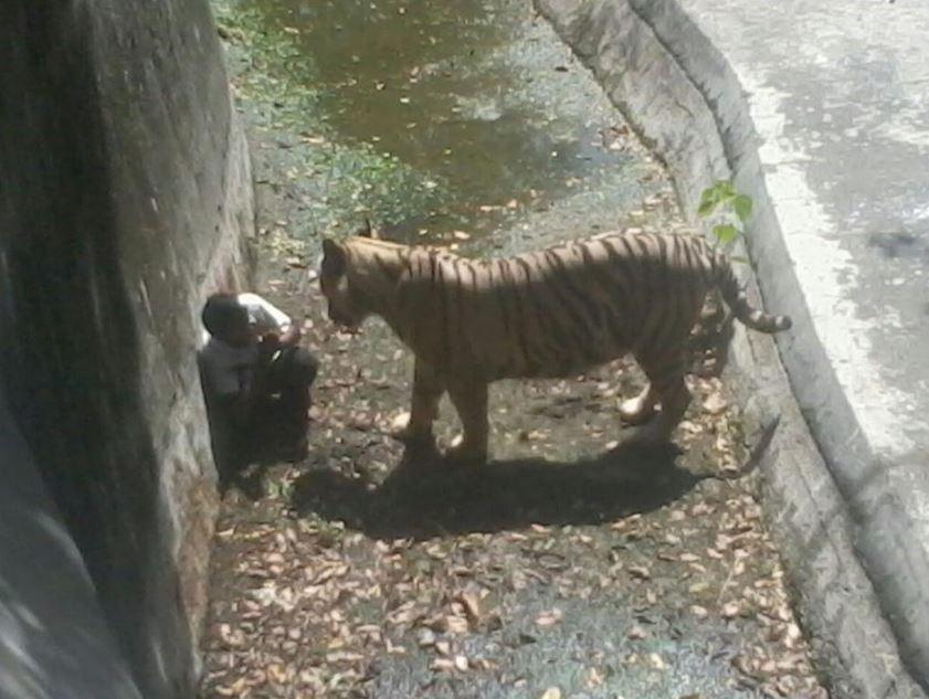 Λευκή τίγρης σκότωσε 20χρονο!