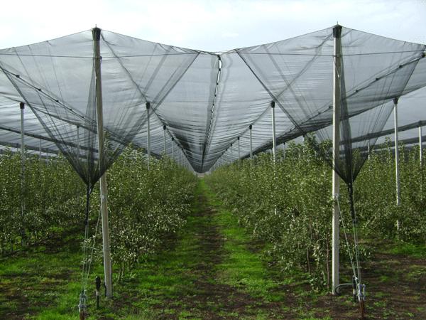 ΕΛΓΑ: Επιχορήγηση εγκατάστασεων αντιχαλαζικών διχτυών