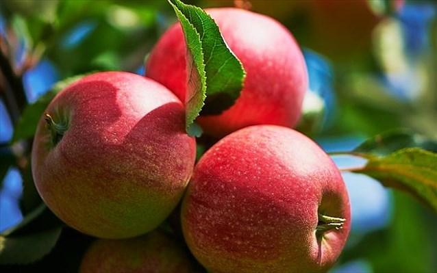Δημιουργήθηκε μήλο «με ανθρακικό»