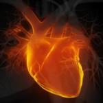 Ελπίδες αυτοανάπλασης της καρδιάς γεννά η ανακάλυψη κυττάρων