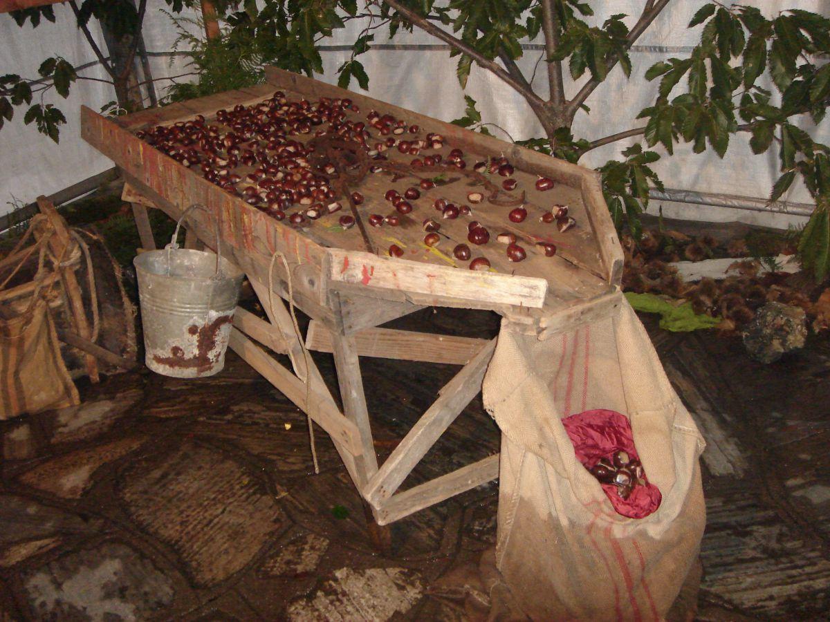 Γιορτή Κάστανου στην Καρίτσα