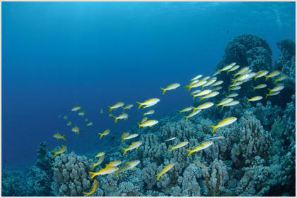 Η Μεσόγειος χάνει τα ψάρια της