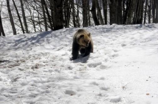 Αντιμέτωποι με τρεις αρκούδες!