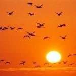Εξαφανίζονται τα πτηνά της Ευρώπης