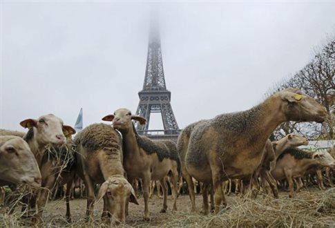 Πρόβατα διαδήλωσαν κατά των λύκων στον Πύργο του Άιφελ