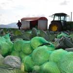 Υποστήριξη επιχειρήσεων του τομέα της κτηνοτροφίας και των οπωροκηπευτικών