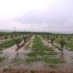 5.000 στρέμματα «πνίγηκαν» στο Καλαμάκι Λάρισας