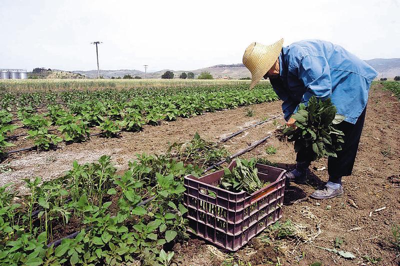 Η θέση της γυναίκας στον αγροτικό τομέα