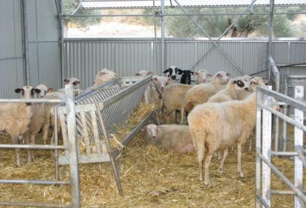 Απλούστευση διαδικασιών για λειτουργία κτηνοτροφικών εγκαταστάσεων