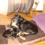 Στο Εφετείο η υπόθεση κακοποίησης της σκυλίτσας